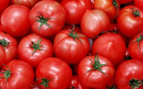 Tomato_pe_690_lycopene_2