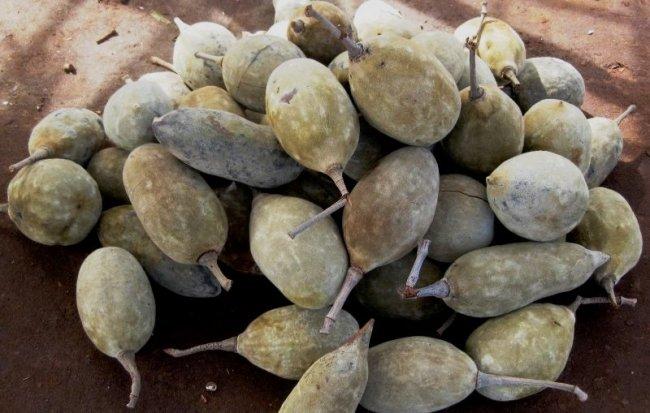 baobab fruits by tonrulkens flickr