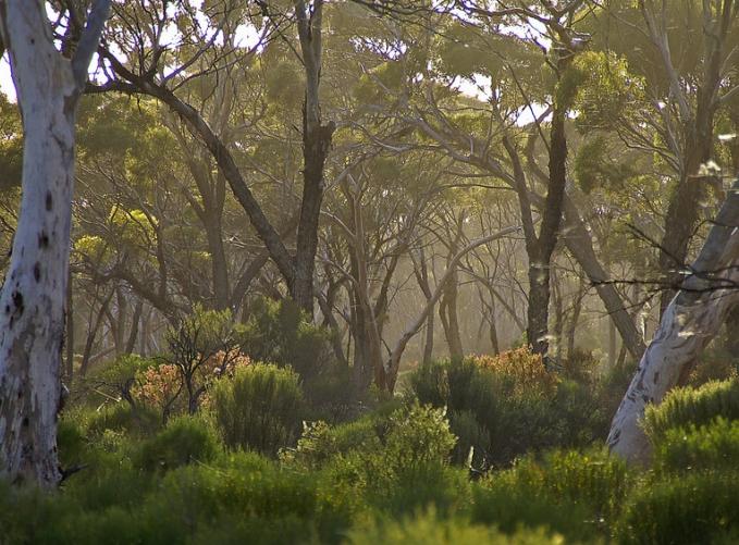 GWW forest 1